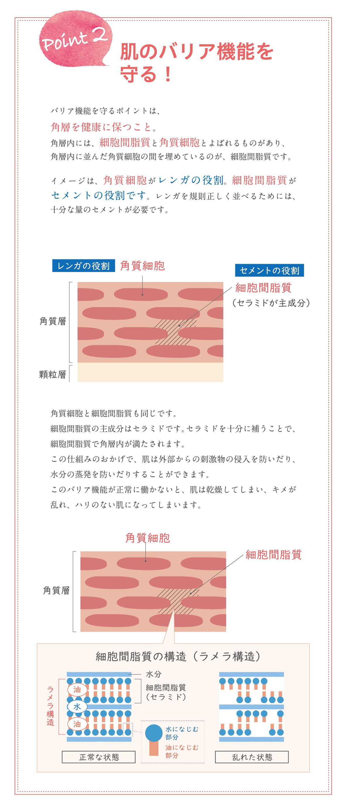 肌の乾燥を防ぐPOINT2_肌のバリア機能を守る