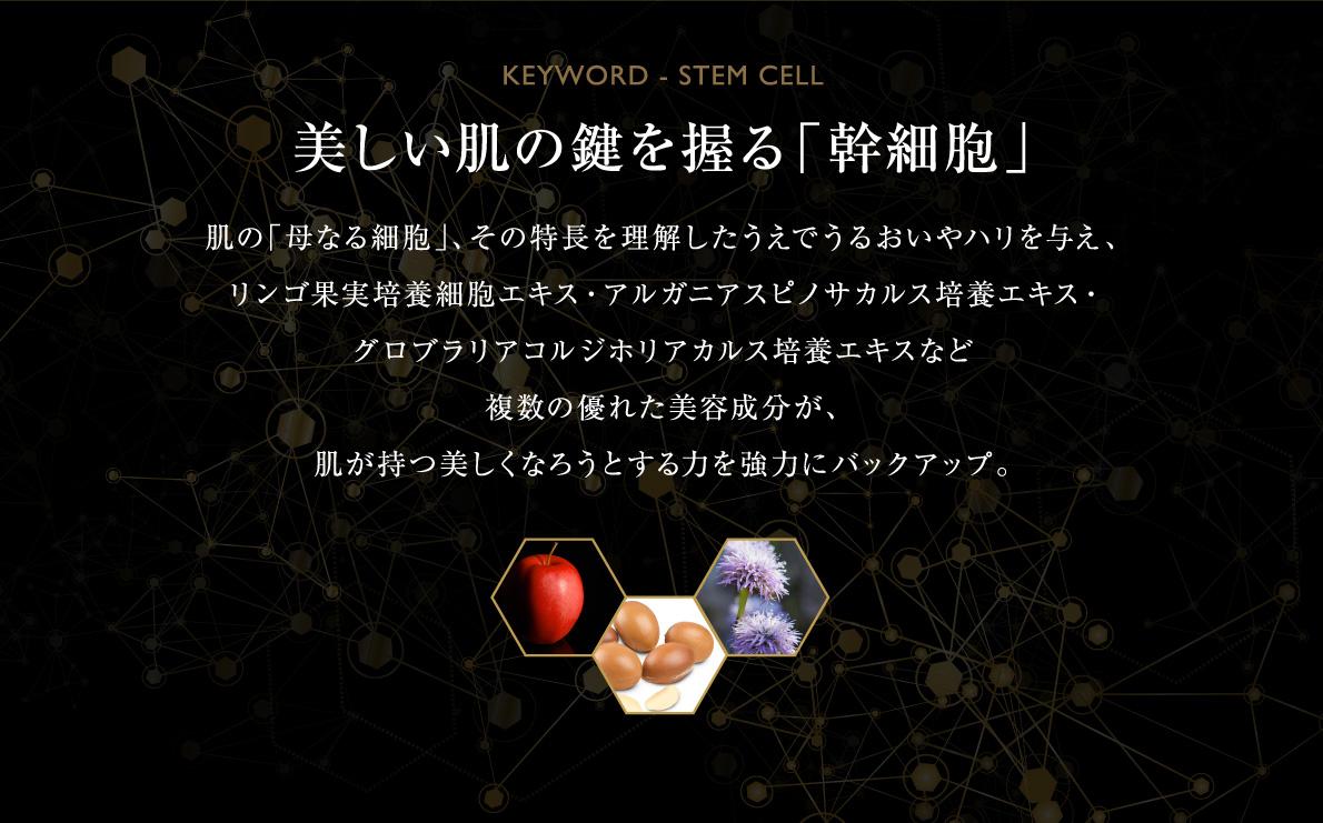 美しい肌の鍵を握る幹細胞